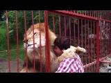 Поцелуй льва своей спасительнице <3